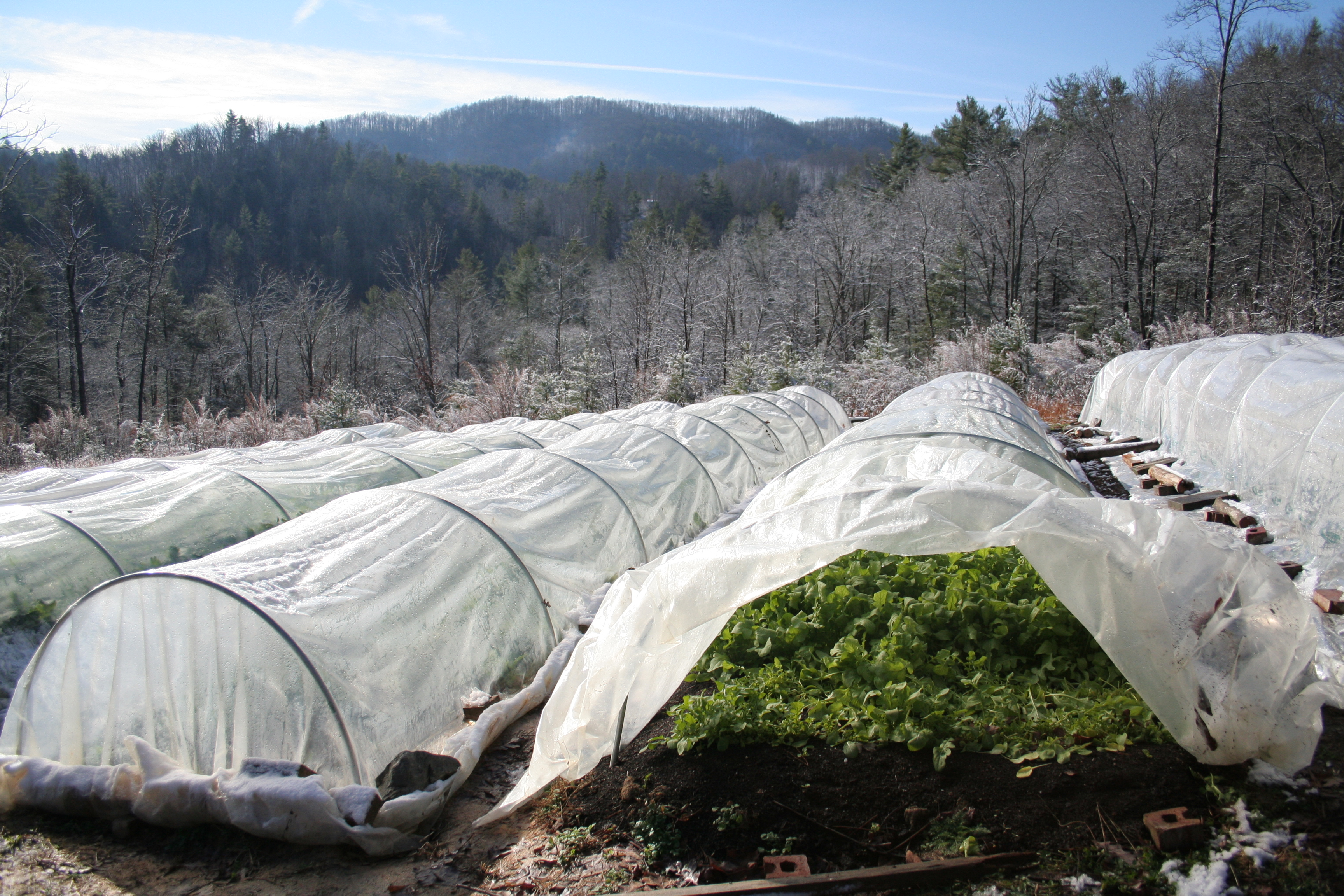 Protection Methods for Overwintering in Low Tunnels